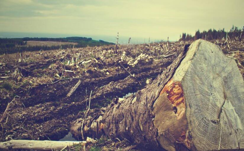 Deforestation scene at a logging site